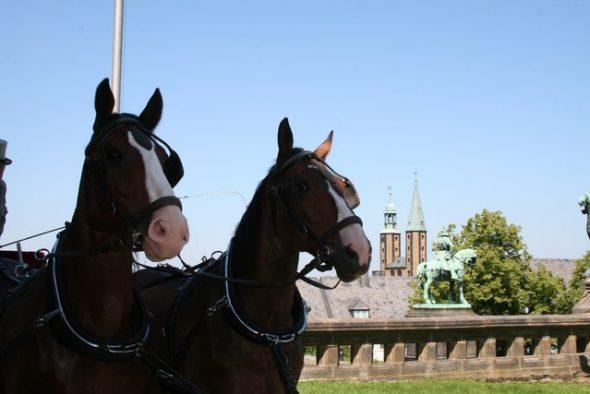 welge 201 590x394 - Sara und Benjamin in der historischen Kaiserpfalz zu Goslar
