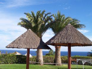 zurawskiII 018 310x232 - Milena und Stefan auf Fuerteventura
