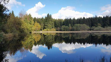 Elke Rott - Die Zeremonie - Freie Trauung - Harz See Berge