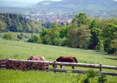 elke rott freie trauung harz berge goslar72 411x294 - Verliebt in die Berge - Ela und Maik